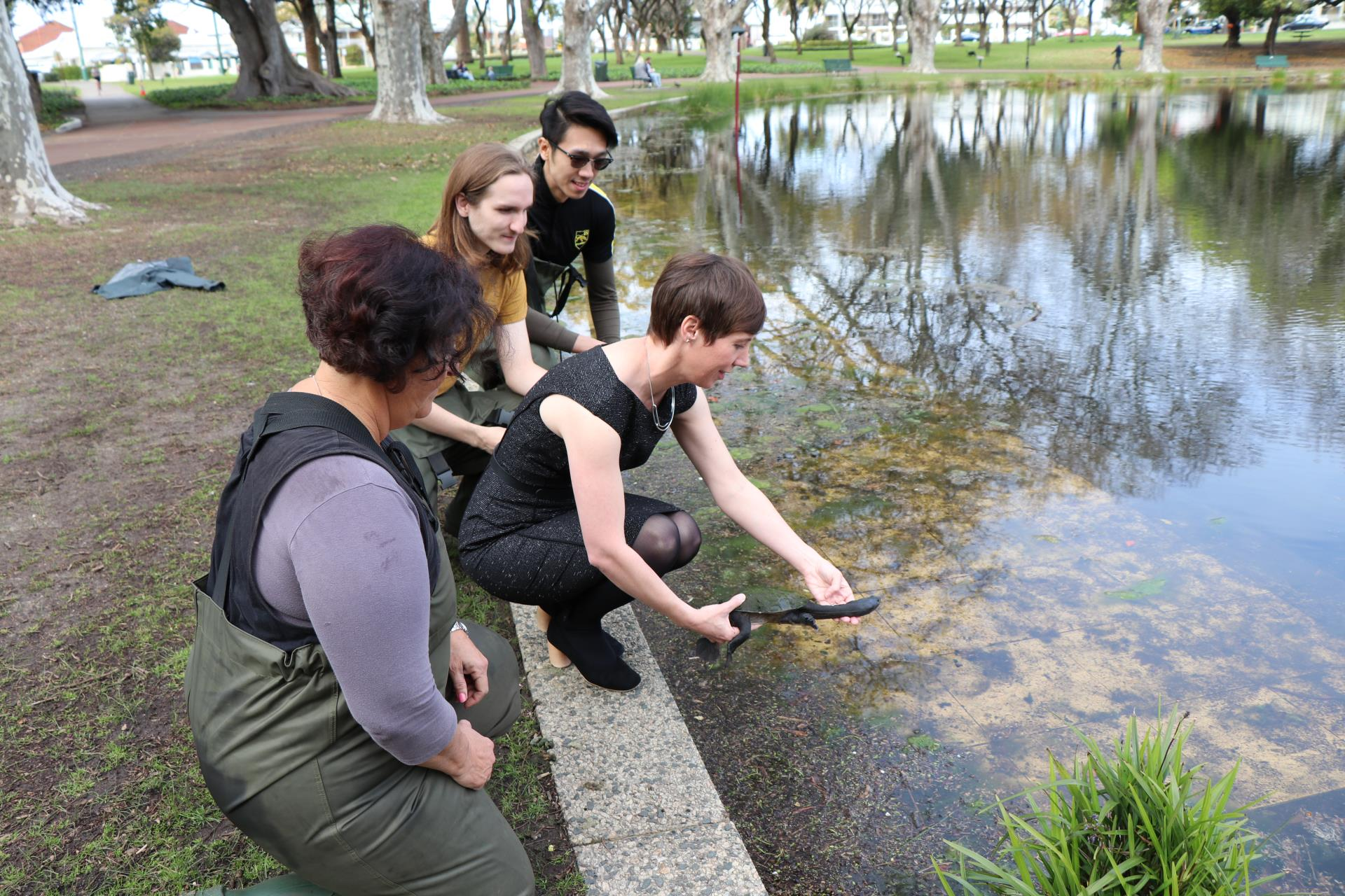 The search for hatchling turtles at Hyde Park
